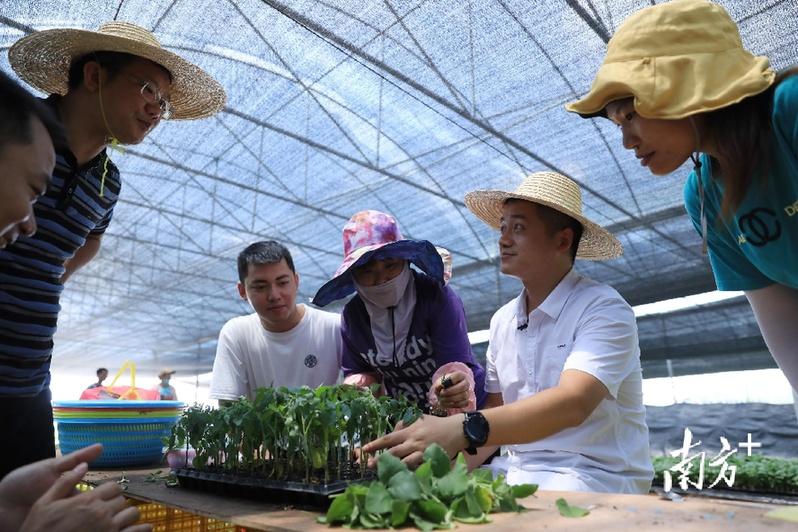 工作队深入圣女果基地调研并与农户就下一步发展商讨研究。