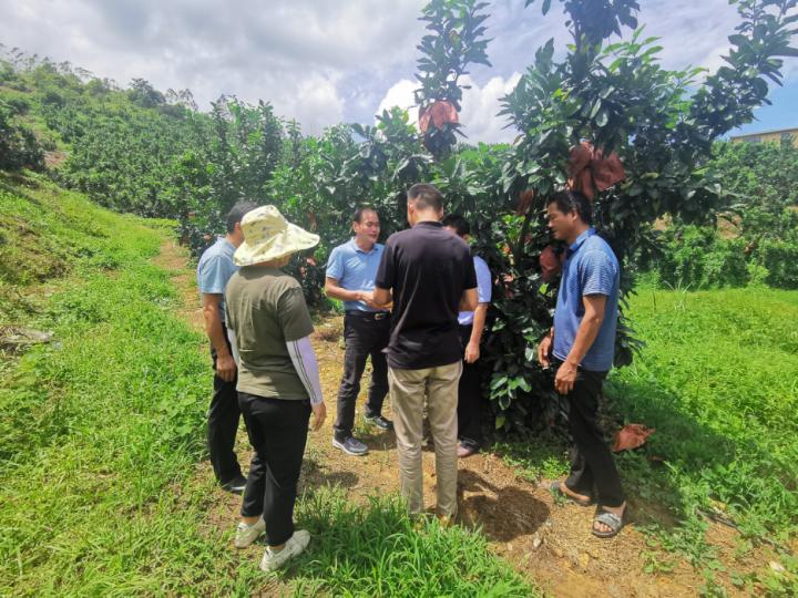 惠城區農技中心的專家調研指導當地柚子產業發展。(來源:惠城區農技中心)