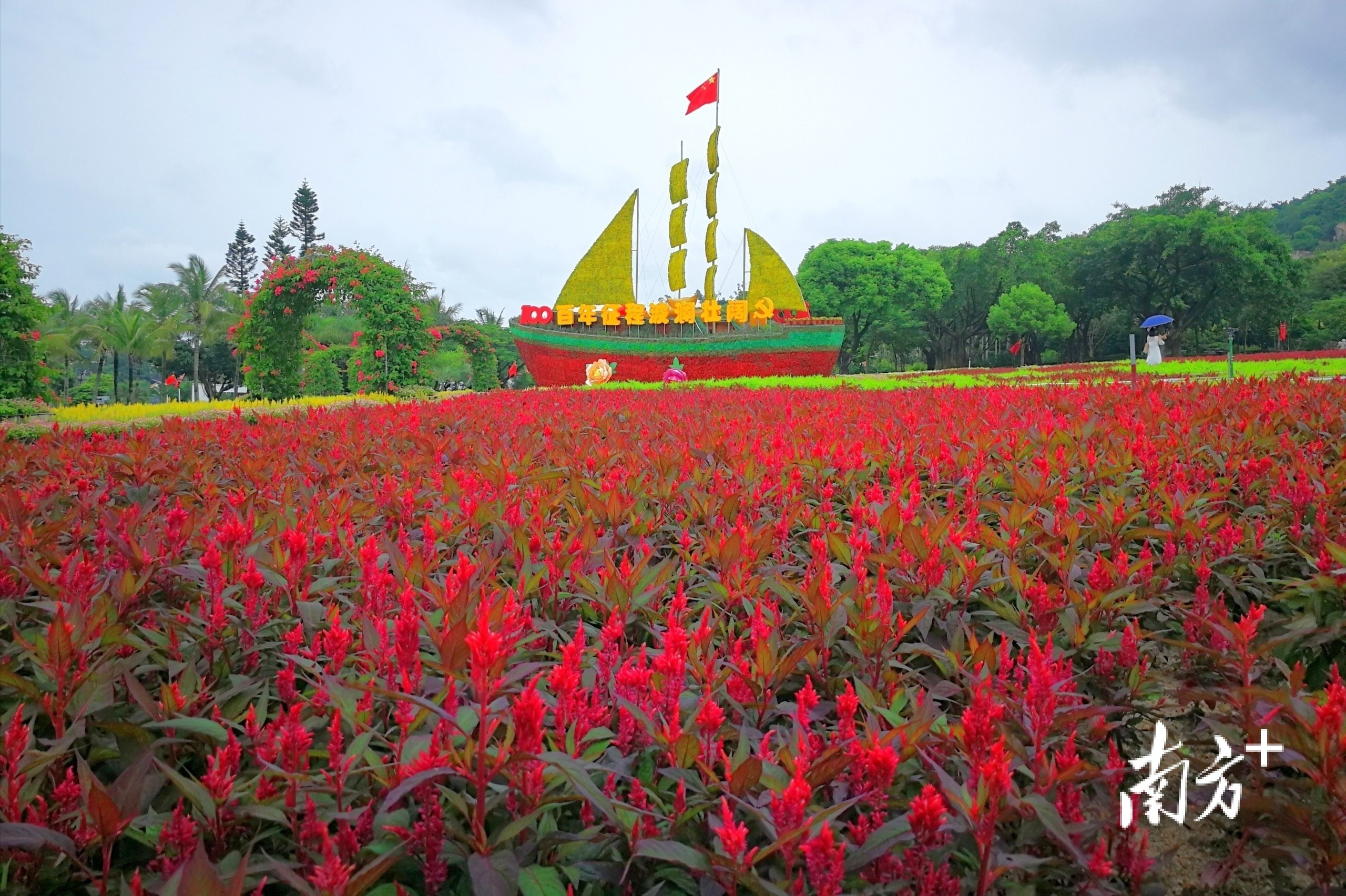 6月29日,珠海海滨公园,一片火红,与帆船造型雕塑相映生辉。 两棵树的恩情 摄