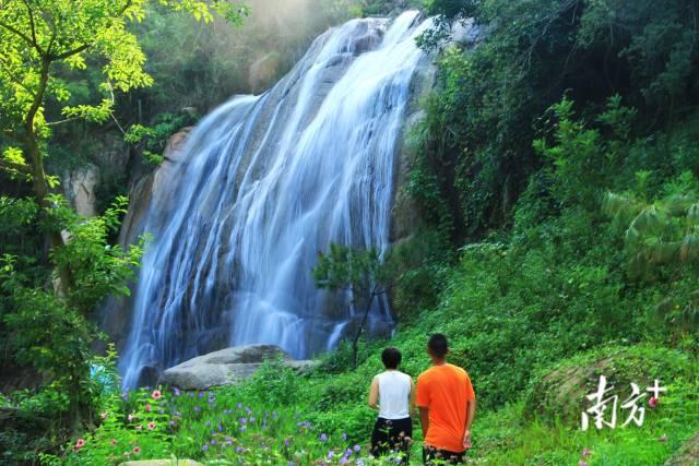 10月6日,珠海香山湖公园,银丝般的瀑布从山上一泻而下。两棵树的恩情 摄